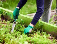 does vinegar help plants grow